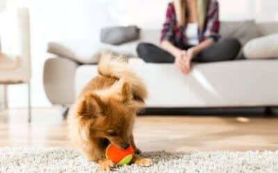 Four Helpful Cleaning Tips for Pet Owners